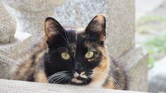 Bajszi  #cat #macska