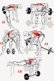 Risultati immagini per shoulder musculation