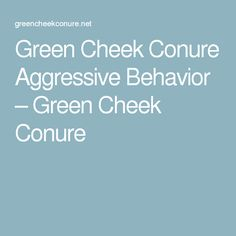 Green Cheek Conure Aggressive Behavior – Green Cheek Conure