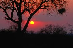 size: Photographic Print: African Sunset, Kruger National Park Poster by Carol Polich : Artists Kruger National Park, Yosemite National Park, National Park Posters, National Parks, Lonely Planet, Camping 3, Africa Destinations, Best Sunset, Stars