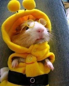 ученая мышь