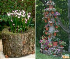 Restos de troncos podem ser reaproveitados para cultivo ou suporte de vasos.