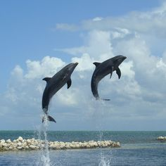 Dolphin Cove, Grand Cayman Island......Best experiance ever swimming with the dolphins!