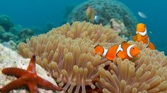 Y3. Australia. Great Barrier Reef: Dive sites and marine life that inspired the Sir Dav...