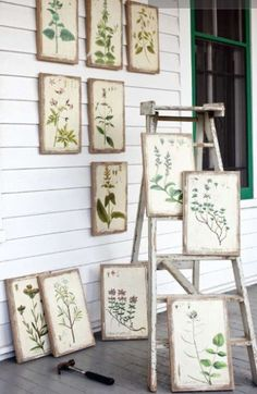 Vintage botanical prints hanging on the wall. / Botanical prints for home decoration / Abbey Smith on Fuseink