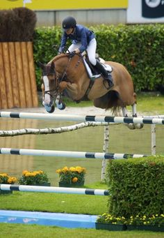Is this not the hunter ring??? Beautiful horse with lots of chrome.