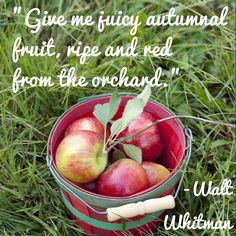 """""""Give me juicy autumnal fruit, ripe and red from the orchard."""" -- Walt Whitman"""