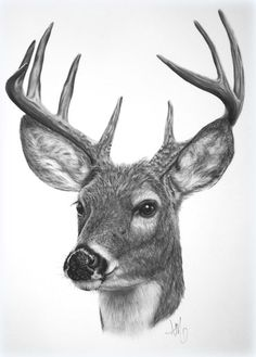 deer sketches - Bing Images