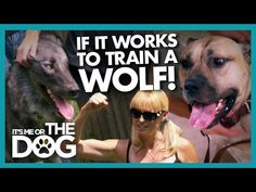 Trained Wolf Teaches Owner the Dangers of 'Dominating' Your Dog | It's Me or The Dog - YouTube