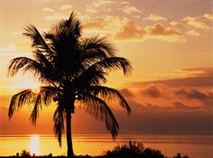 Sunrise at Coconut Palms, Sanibel Island... may be very cool in a bedroom.. hmmm