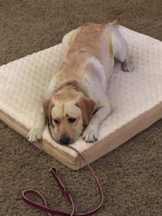 """Phoenix dog training """"k9katelynn"""" now has over 8,000 business connections on…"""