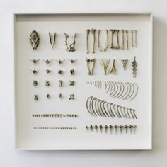 Bones organized neatly. Reminds me of how I lay my bones done to dry after cleaning them.
