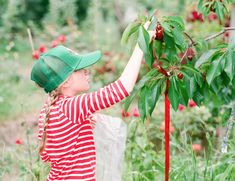 Mt View Orchards is a locally grown orchard in the Hood River Valley. Specializing in u-pick pears, apples, peaches, berries and direct wholesale. To Do Checklist, Cowboy Hats, Peach, Orchards, Peaches, Fruit Tree Garden