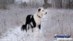 Zostawił psa na mrozie #Brzeszcze #mróz #pies #działka #zimno