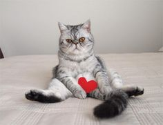 È la Giornata del gatto, superstar del web - Repubblica.it