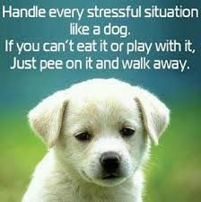 stop stressing out! its making you sick!