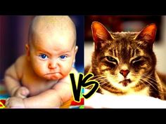 Funny Cat VS Baby in the world Compilation #1 - Mkls -  #animals #animal #pet #cat #cats #cute #pets #animales #tagsforlikes #catlover #funnycats  Learn how to speak cat! Click HERE for the cat bible! Always present a very funny video compilation in the world. Guaranteed to make you laugh. Ha ha ha… Thanks for watching…. 🙂 🙂 🙂  - #Cats