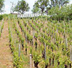 A Mittelwihr le grand cru s'appelle ici Mandelberg (« colline des amandiers »). La légende raconte que c'est Charlemagne qui aurait laissé des coquilles sur le sol après une halte gourmande.