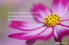 Greek, Words, Quotes, Plants, Quotations, Greek Language, Qoutes, Plant, Quote