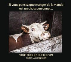 Images Vegan Friendly   VEGAN FRANCE   Portail Végan / Végétarien / Végétalien