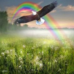 Eagle and rainbow painting