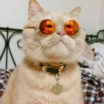 Cat Sunglasses - Protect your perches kitty eyes with fashionable sunglasses