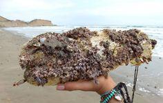 https://flic.kr/p/tGf9iP   vida marina   vida marina en una botella, en la playa de Olón