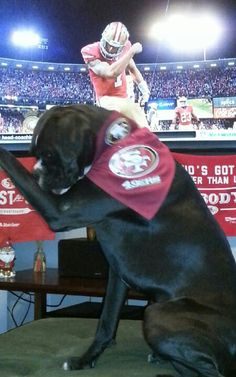 Kaepernicking boxer--I need to teach my kids to do this. Go Niners!!