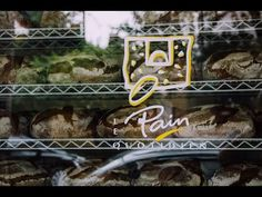 Le Pain Quotidien | Gastronomia - YouTube