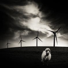 Giorgio Bisetti | ... Sheep And Wind Turbines, photography by Giorgio Bisetti. Image #452379