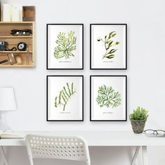 Seaweed print Set of 4 - 8x10 Watercolor painting, Nautical print, Botanical print set, Coastal Living, Apartment decor, Green artwork