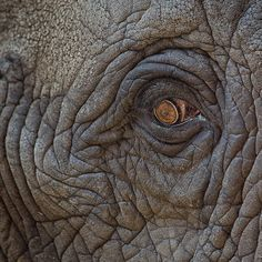 Elephant Eye by garreyf
