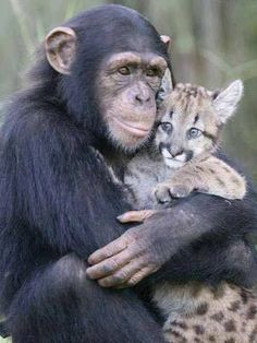 amazing monkey and cat love Animals And Pets, Baby Animals, Funny Animals, Cute Animals, Funny Animal Photos, Animal Pictures, Pet Photos, Unlikely Animal Friends, Little Kitty