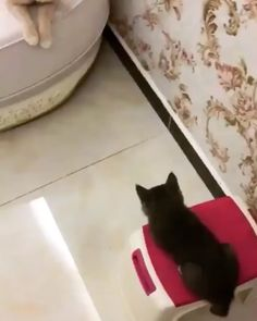 Hey, what are you guys talking about? - Ellenore - Hey, what are you guys talking about? 🎶 Here we are now, entertain us! Cute Funny Animals, Cute Baby Animals, Animals And Pets, Funny Cats, Cute Animal Videos, Funny Animal Pictures, Cute Cats And Kittens, Kittens Cutest, Ragdoll Kittens