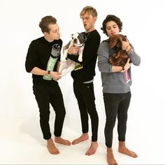 This is adorable - The Vamps and puppies?