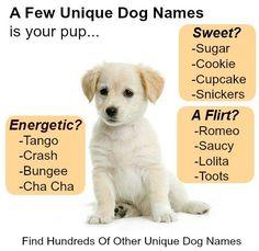 encuentra cientos de nombres únicos de perros y nombres de cachorros en & finden sie hunderte von einzigartigen hundenamen und welpennamen auf Pet Names For Girls, Pet Names For Boyfriend, Cute Puppy Names, Cute Puppy Pictures, Cute Names, Cute Puppies, Cute Dogs, Dogs And Puppies, Unique Names