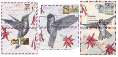 Bird Collection – Les superbes illustrations sur papier ancien de Mark Powell (image)