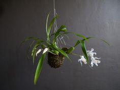 Gestaltungsideen Blumenampel