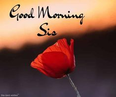 good-morning-sis Good Morning Prayer, Good Morning Gif, Morning Blessings, Good Morning Picture, Good Morning Greetings, Morning Prayers, Good Morning Quotes, Morning Sayings, Prayers For Sister