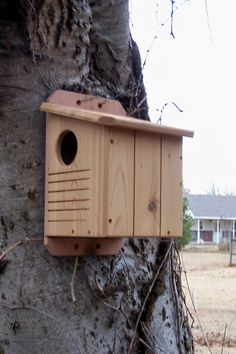 The squirrels that live in the walnut tree in my backyard would love this house.