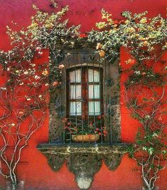 stone surround window against a red-orange wall with climbing vine