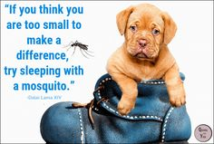 """QUOTES For YOU!: """"If you think you are too small to make a difference..."""""""