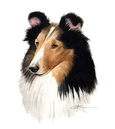 SHELTIE Dog Watercolor Painting ART Print Signed by k9artgallery