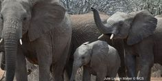 Urge Your Senators To Support the END Wildlife Trafficking Act And Save Endangered Species