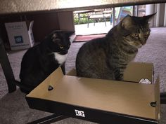 Waiting in line for the glorious box!!! Ha ha ha!! #cat #cats #catsofinstagram #funny #funnycat #catinabox