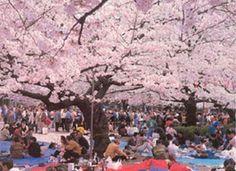 早咲きの河津桜の花だよりも各地から届き、一足早い花見をお楽しみの方もおいでだろう。文無しの2人が酒屋から酒3升と釣り銭用の5銭を借り、