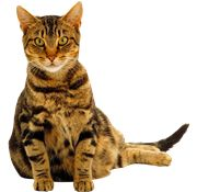 Cat PNG Images On this site you can download free Cat PNG image with transparent background