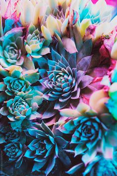 Ideas succulent photography nature plants for 2019 Succulents Wallpaper, Succulents Drawing, Colorful Succulents, Succulents In Containers, Flower Wallpaper, Planting Succulents, Succulent Plants, Indoor Succulents, Propagating Succulents