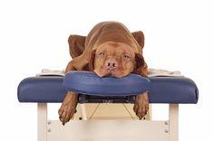 A massagem reduz o stress do cachorro