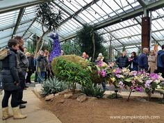 From Saturday the February until Sunday the March The Royal Botanic Gardens, Kew are hosting their Orchid Extravaganza! This year, Kew Kew Gardens, Botanical Gardens, Garden S, Growing Plants, Cut Flowers, Floral Arrangements, Orchids, Behind The Scenes, Places To Visit
